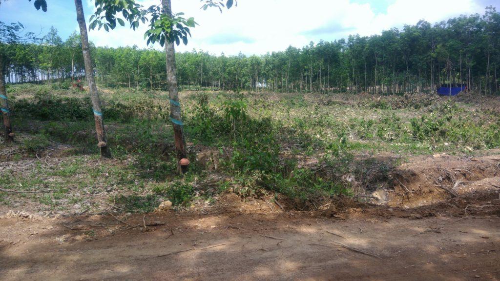 Bán đất thổ cư phường Tân Đồng